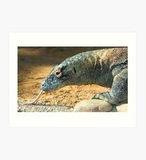 Komodo Dragon at Lowry Park Zoo Art Print