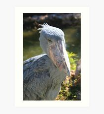 Shoebill Stork at Lowry Park Zoo Art Print