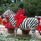 Holiday Zebra by albertsville