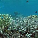 Nusatupe Lagoon by Reef Ecoimages
