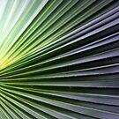 Palm Leaf by Christopher Herrfurth