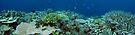 Binusa Pt VII by Reef Ecoimages