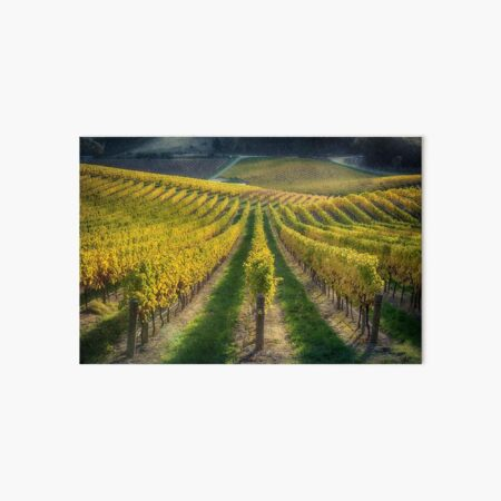 In Vino Veritas IV Art Board Print