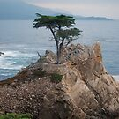 Lone Cypress by MaryLynn