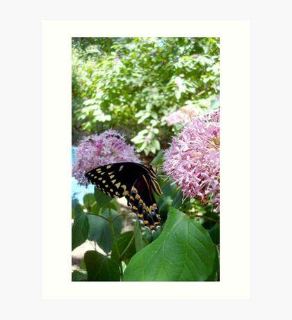 Giant Swallowtail Butterfly in profile Art Print