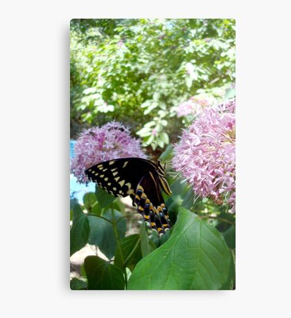 Giant Swallowtail Butterfly in profile Metal Print
