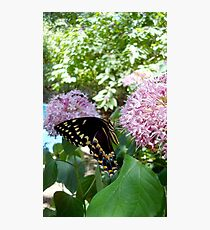 Giant Swallowtail Butterfly in profile Photographic Print