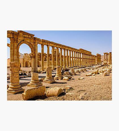 Palmyra More Collonades  Photographic Print