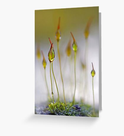 Magical world Greeting Card