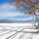 Winter on Schouwen by Adri  Padmos