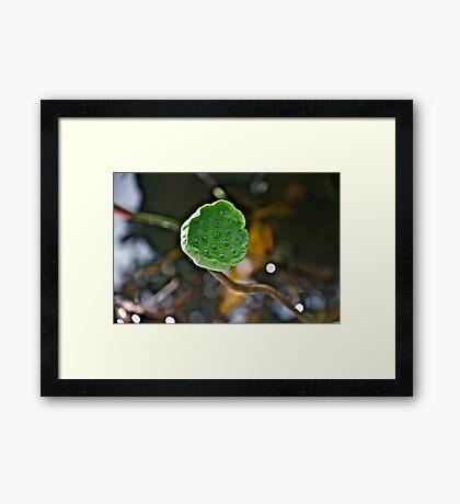 Her seed Framed Print