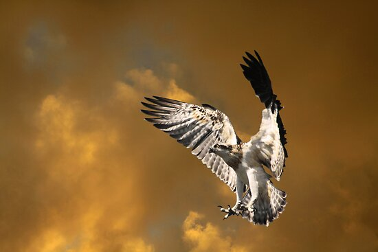 Learning to Fly by byronbackyard