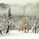 Winterland by Leasha Hooker