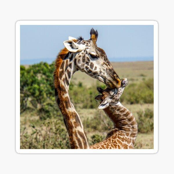 Affectionate Mama and Baby Giraffe Sticker