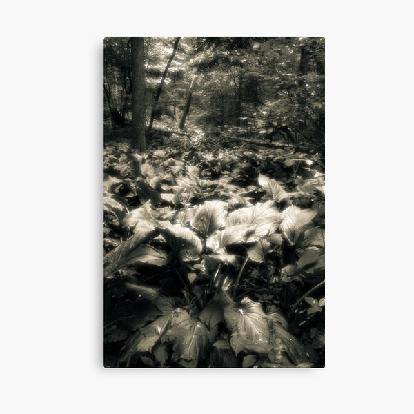 Rememberance Of Walking  Canvas Print