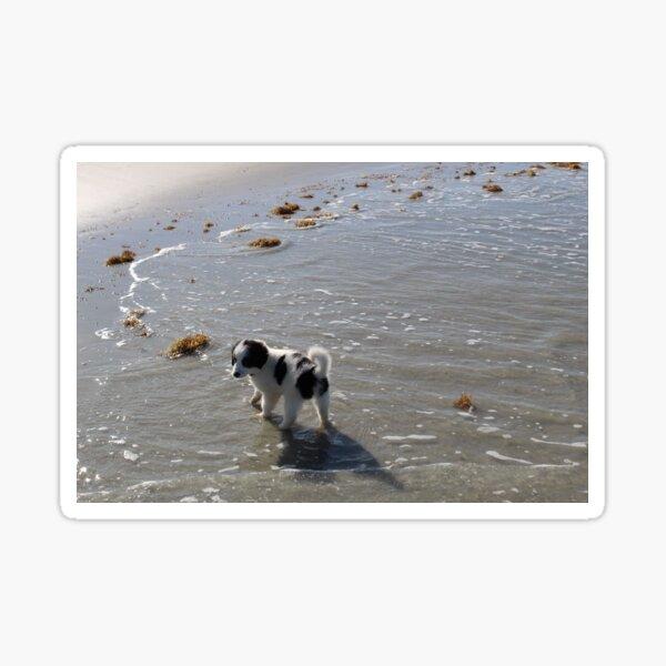 Australian Shepherd Puppy's First Day at the Beach Sticker