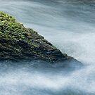 Moss by Milos Markovic