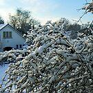 Winter in Edegem - Belgium by Gilberte