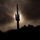 Desert Aura by Sue  Cullumber
