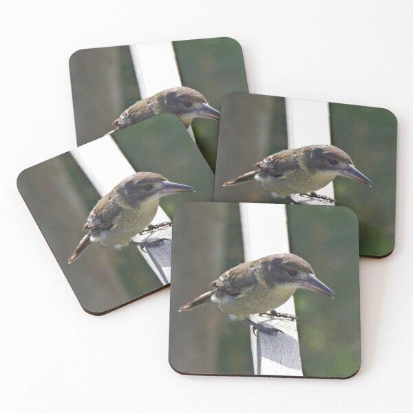 ARTAMIDAE ~ Grey Butcherbird PABPR9QF by David Irwin 220919 Coasters (Set of 4)