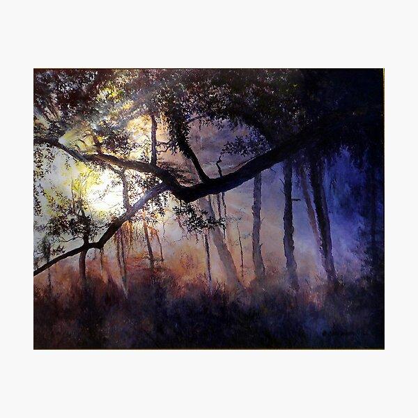 """Myakka River - Shadow Crossing"" Photographic Print"