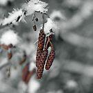 Frozen by Evette Lisle