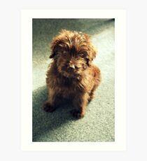 Mulligan ~ Puppy Portrait Art Print