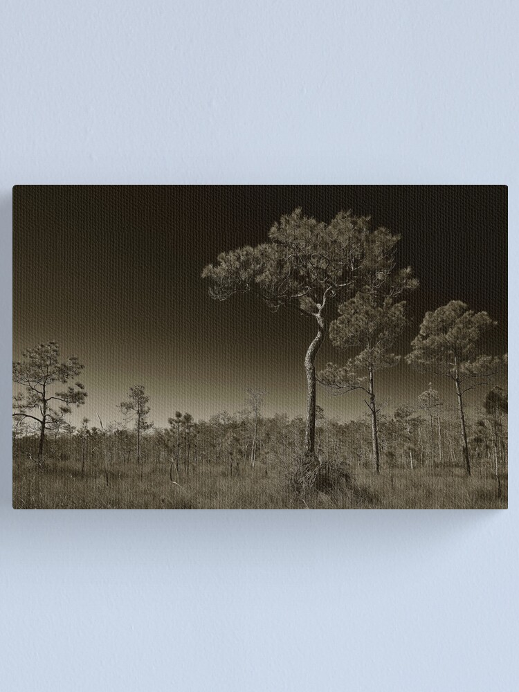 Alternate view of Pine Flatwoods Canvas Print