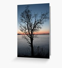 Lone Tree Overlooks Cook Inlet at Dusk  Greeting Card