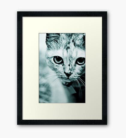 Meow....where are you mommy? : On Featured Work Framed Print