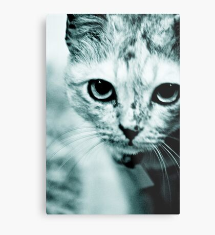 Meow....where are you mommy? : On Featured Work Metal Print