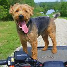 """Tucker""""s Favorite Ride by barnsis"""
