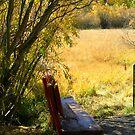 """""""trailside Bench"""" by Lynn Bawden"""
