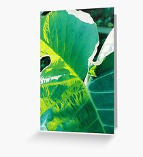 Elephant Ear Greeting Card