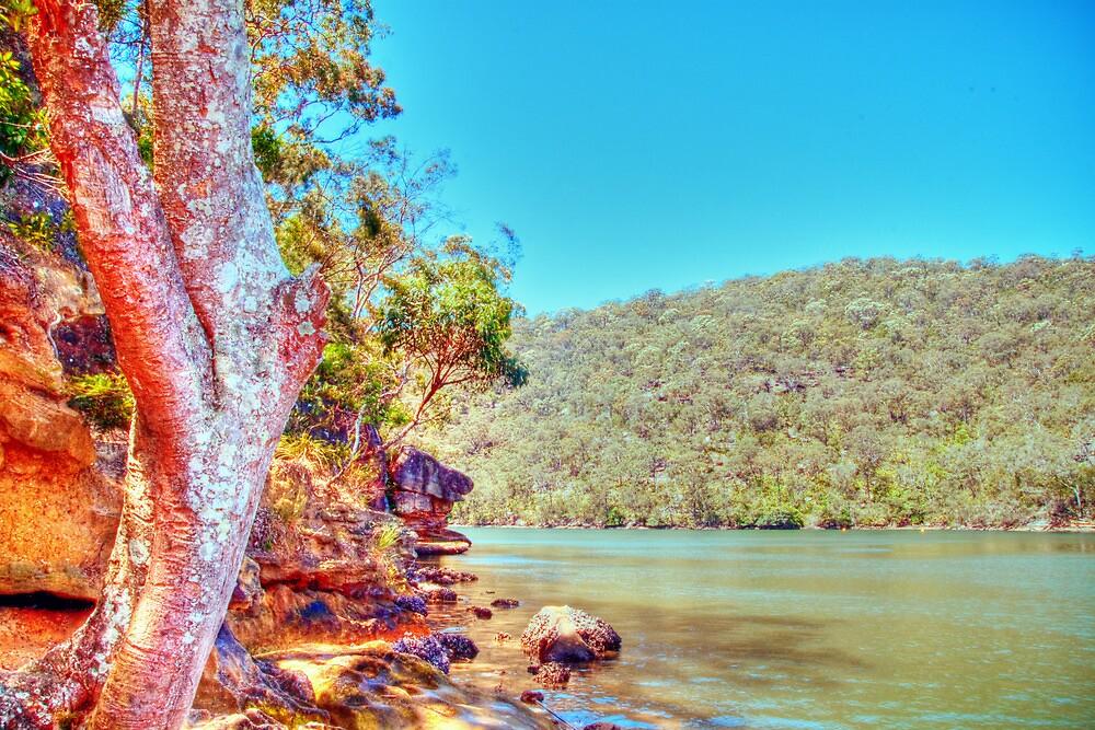 Bobbin Head, NSW, November 2010 by elspiko