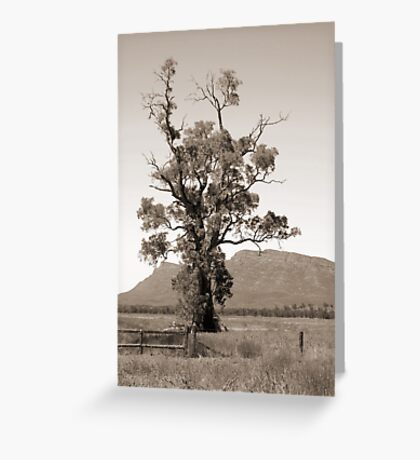 The Cazneaux Tree Greeting Card