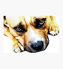 Bull Terrier Eyes Photographic Print