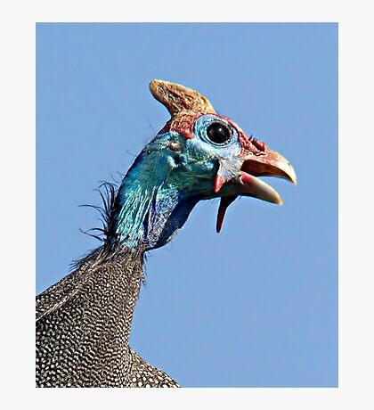 Helmeted Guinea Fowl Photographic Print