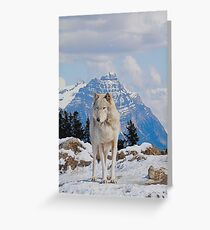 White Grey Wolf & Rocky Mountains Art  Greeting Card