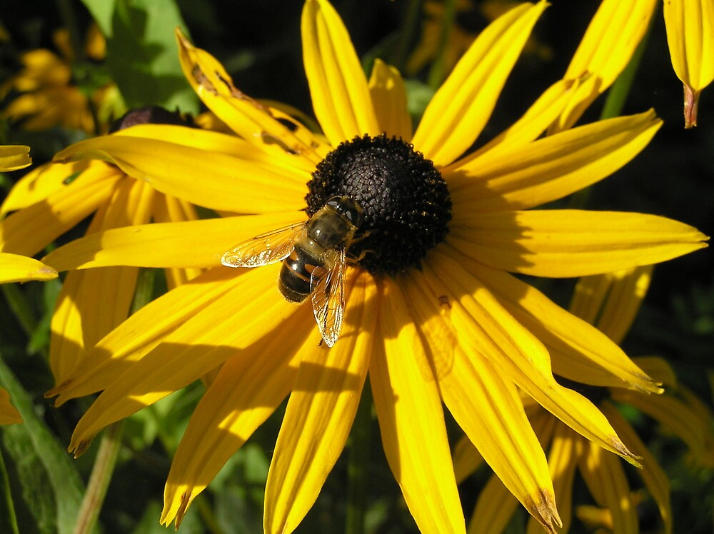 Bee on a flower by Alien Banana