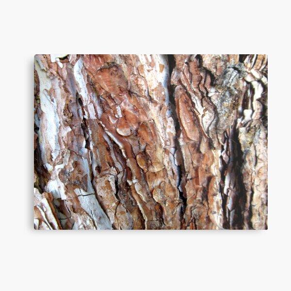 Baumrinde, Baumstamm, Baum, Bäume Metallbild