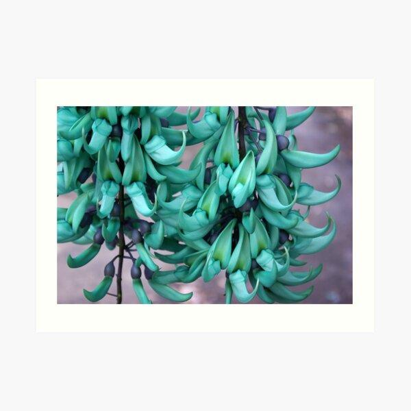 Jade Vine in Flower Art Print
