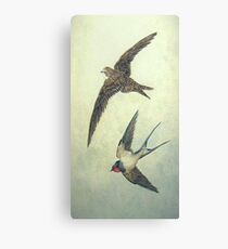From Swift to Swallow Canvas Print