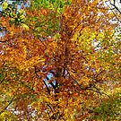 Autumn is here by Cosmin Roszkos