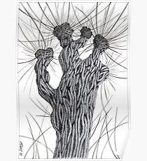 Pollard Willow Tree - Pen Drawing Poster