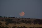 Lunar Eclipse by Murray Wills
