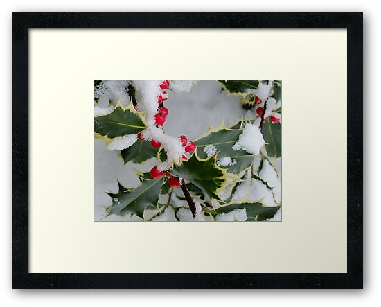 Christmas berries by Themis