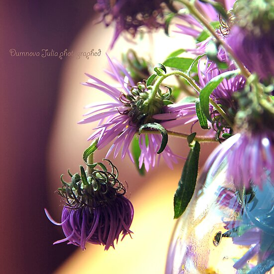 purple corn flowers in a vase by Iuliia Dumnova