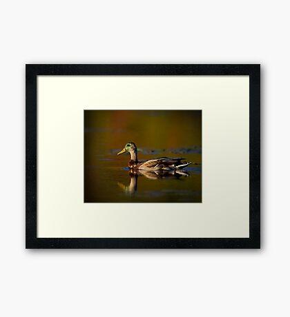 Cross-dressed Duck Framed Print