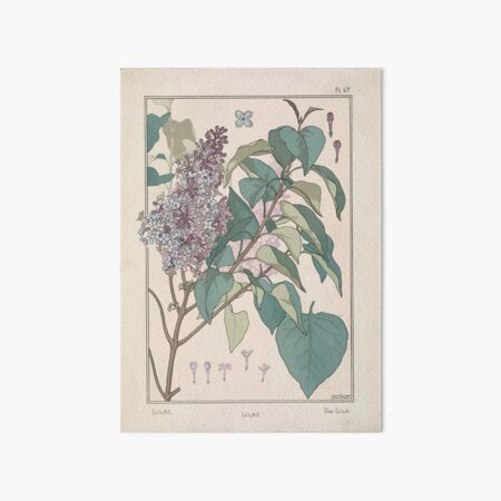 Plante et Ses Applications Ornementales Ornamental Plants Grasset Eugene Maurice Pillard Verneuil 1896 Art Nouveau 0093 Lilac Art Board Print
